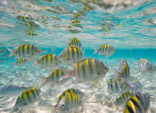 Potápění v Dominikánské republice
